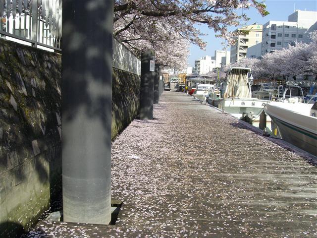ho-sakurafubuki16_R.jpg